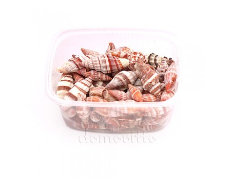"Ракушки индийские ""Спиральки коричневые"", 165 гр"
