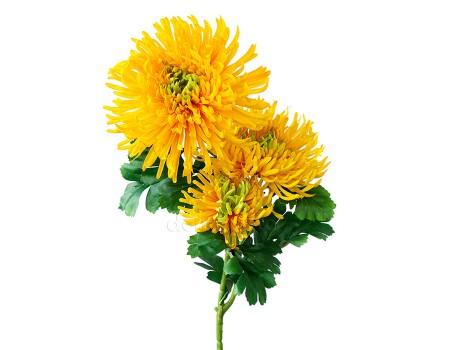Хризантема искусственная желтая, 90 см