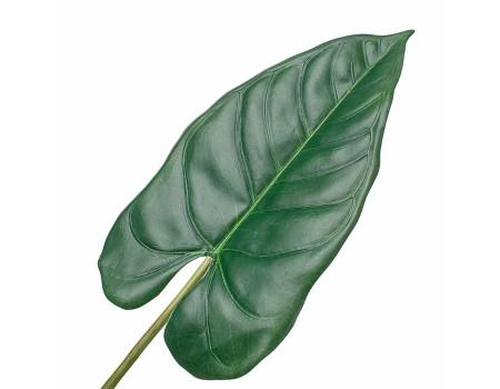 Лист тропический темно-зеленый, 70 см