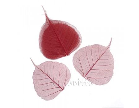 Листья скелетированные, 10 шт. Разные цвета