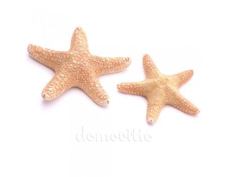 Морская звезда филиппинская, 7-10 см
