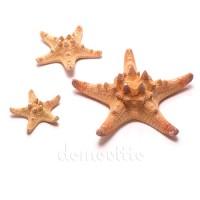 Морская звезда натуральная