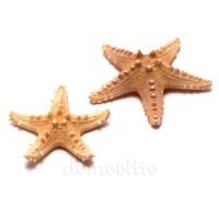 Морская звезда Long Spine натуральная