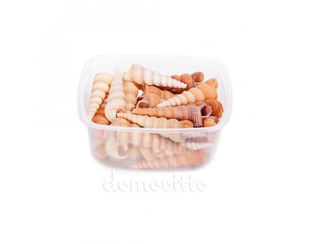 Ракушки декоративные конические, 100 гр