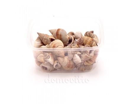 Ракушки декоративные средиземноморские, 100 гр