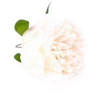 Голова пиона шелковая, d10 см. Цвета: Белый, Кремовый