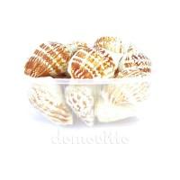 "Набор морских ракушек ""Стромбус"", 130 гр"