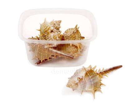 "Набор морских ракушек ""Мурекс"", 70 гр"
