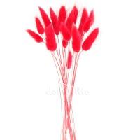 Лагурус красный для сухих букетов, 20 шт