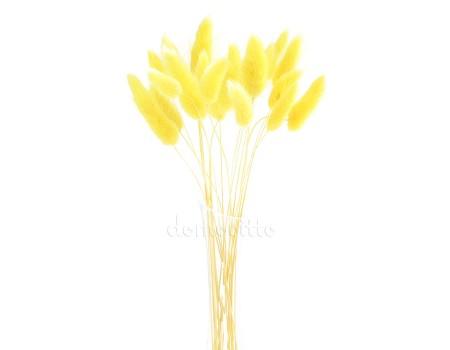 Лагурус светло-желтый для сухих букетов, 20 шт