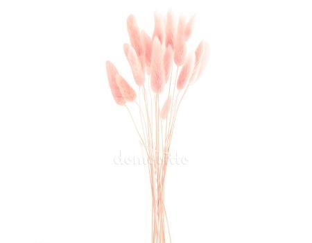 Лагурус светло-розовый для сухих букетов, 20 шт